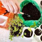 Активированный уголь – 10 оригинальных способов применения на даче