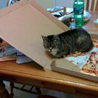 Странная кошачья логика, которую человеку никогда не постичь