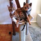 Эти собаки решили стать котами! И у них отлично получается