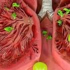 Советы, как устранить слизь и мокроту из горла и груди