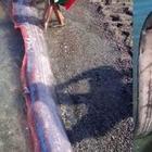 Появление странных морских существ вызвало панику на Филиппинах