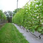 Опоры для вьющихся растений: идеи для вашего сада