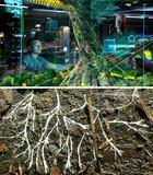 9 потрясающих фактов о растениях, которые нам почему-то не рассказывали на биологии