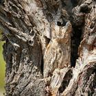 Найдите сову на фото