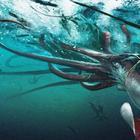 7 загадок из глубины океана, которые ставят в ученых в тупик