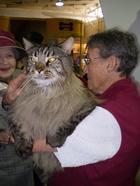 20 огромных котов, чьи размеры даже немного пугают