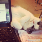 20 проблем, известные каждому, у кого есть кошка