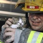 Животные, которых спасли храбрые пожарные