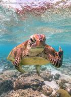 Победители конкурса на самую смешную фотографию дикой природы 2020 года