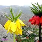 Цветы, которых вы наверняка никогда не видели