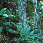 Среди этих деревьев спрятался попугай, найдите его!