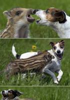Невероятная дружба между животными
