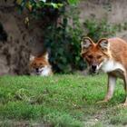 10 удивительных животных планеты Земля, о которых вы могли не знать