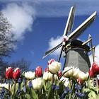 Страна будущего или царство разврата? 10 мифов о Нидерландах