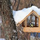 Кормушка для птиц — фото и инструкции по постройке и основные типы кормушек