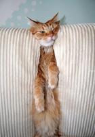 Кошки и коты очень странные создания