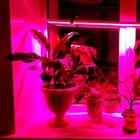 Фитолампа для растений. Как просто установить фитолампу на окне