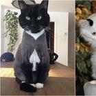 Фотографии кошек весьма неожиданных окрасов, которые обязательно вызовут улыбку