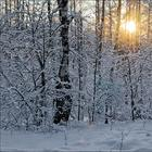 Сладкий день в зимнем лесу