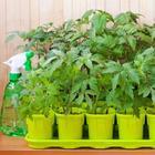 Как вырастить крепкую рассаду – 5 простых правил
