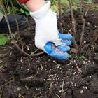 Смородина и крыжовник осенью: самые важные процедуры