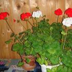 Цветы которые должны быть в каждом доме