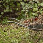 Опасные растительные остатки. Не оставляйте их на участке на зиму