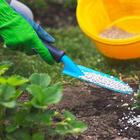 Чем и как удобрять клубнику весной для хорошего урожая, сроки и схемы