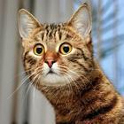 6 кошачьих привычек, которым, есть объяснение