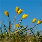 Фотопрогулки. Скифский тюльпан