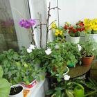 11 холодоустойчивых растений, которые можно выращивать на балконе до заморозков