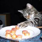 Прикольные коты вечно что-то воруют