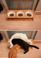 Забавные кошкины проказы: что ими движет?