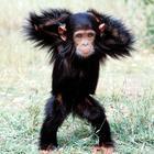 Танцующие животные в фотографиях