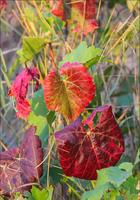 Фотопрогулки      Осенние зарисовки