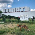 25 фото того, как изменилась природа в Припяти после аварии на Чернобыльской АЭС