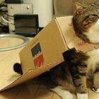 13 самодельных способов порадовать свою кошку