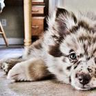 Природа пошутила: 35 собак, получивших удивительный окрас