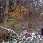 Сможете ли вы найти диких оленей, спрятавшихся на этих фотографиях