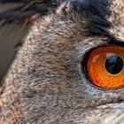 Глаза животных: фото проект
