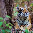Закон джунглей: удивительная дикая Индия