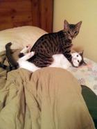 Эти 11 котов не ожидали, что вы вернётесь домой так рано