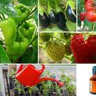 Применение йода для подкормки и защиты растений