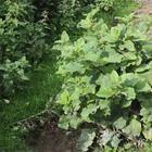 Травы, которые помогут наладить обмен веществ и снизить сахар