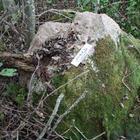 Чудеса резонанса? Кричащий и движущийся камень в белорусском лесу