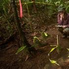 В Гондурасе нашли следы неизвестной цивилизации