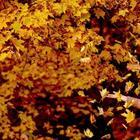 Осень в воздухе: сезонные фотографии