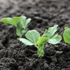 Что посадить в огороде в сентябре
