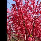 Цветущий Симферополь или Прогулка по ботаническому саду
