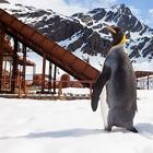 Пингвины в Антарктиде в фотопроекте
